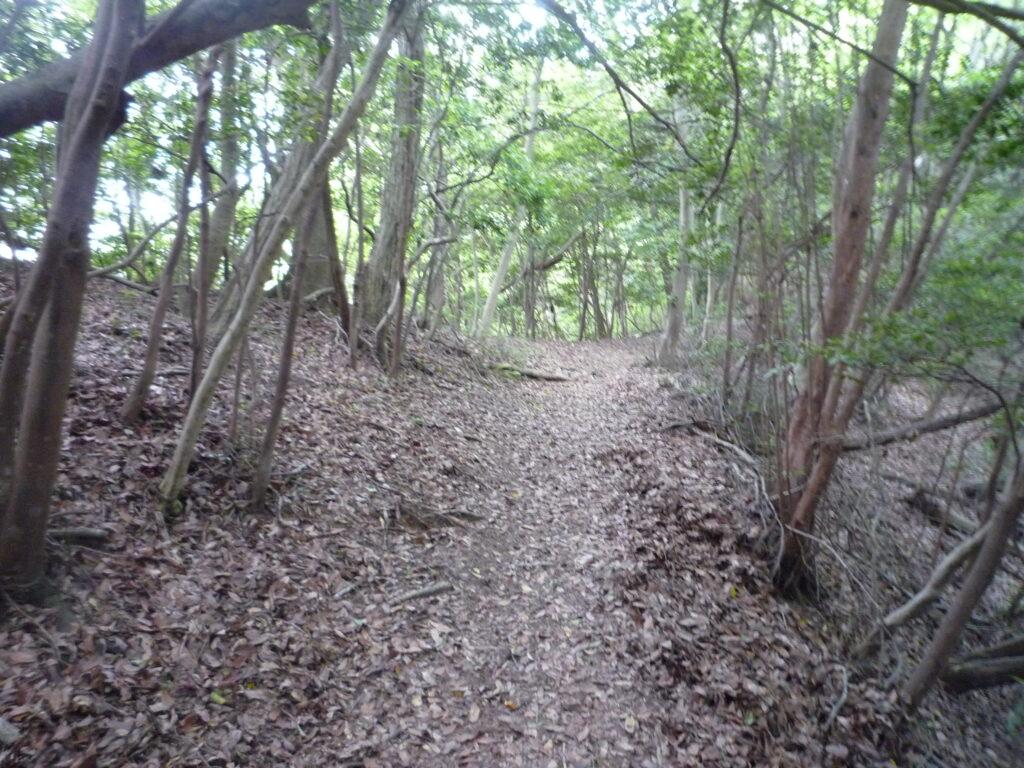白石山の整備された登山道