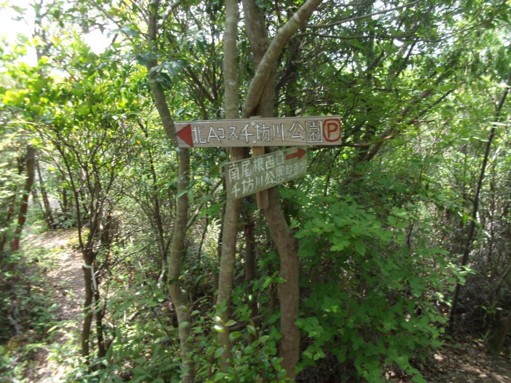 勘十郎岳からの下山の分岐