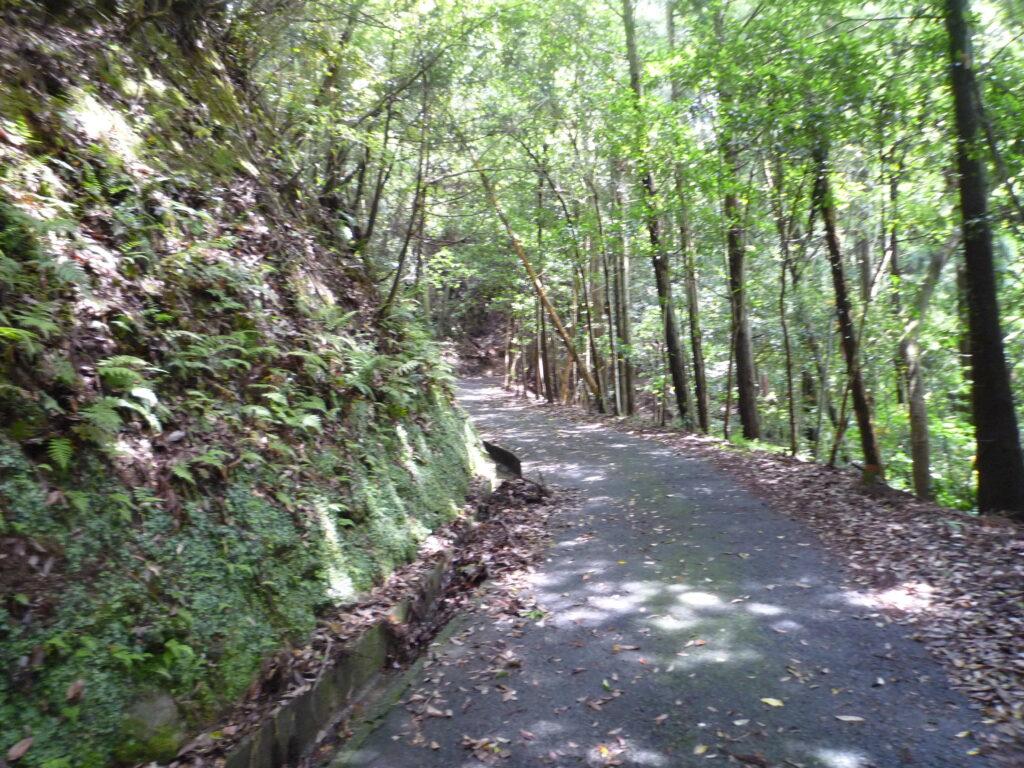 高嶺城跡への舗装路