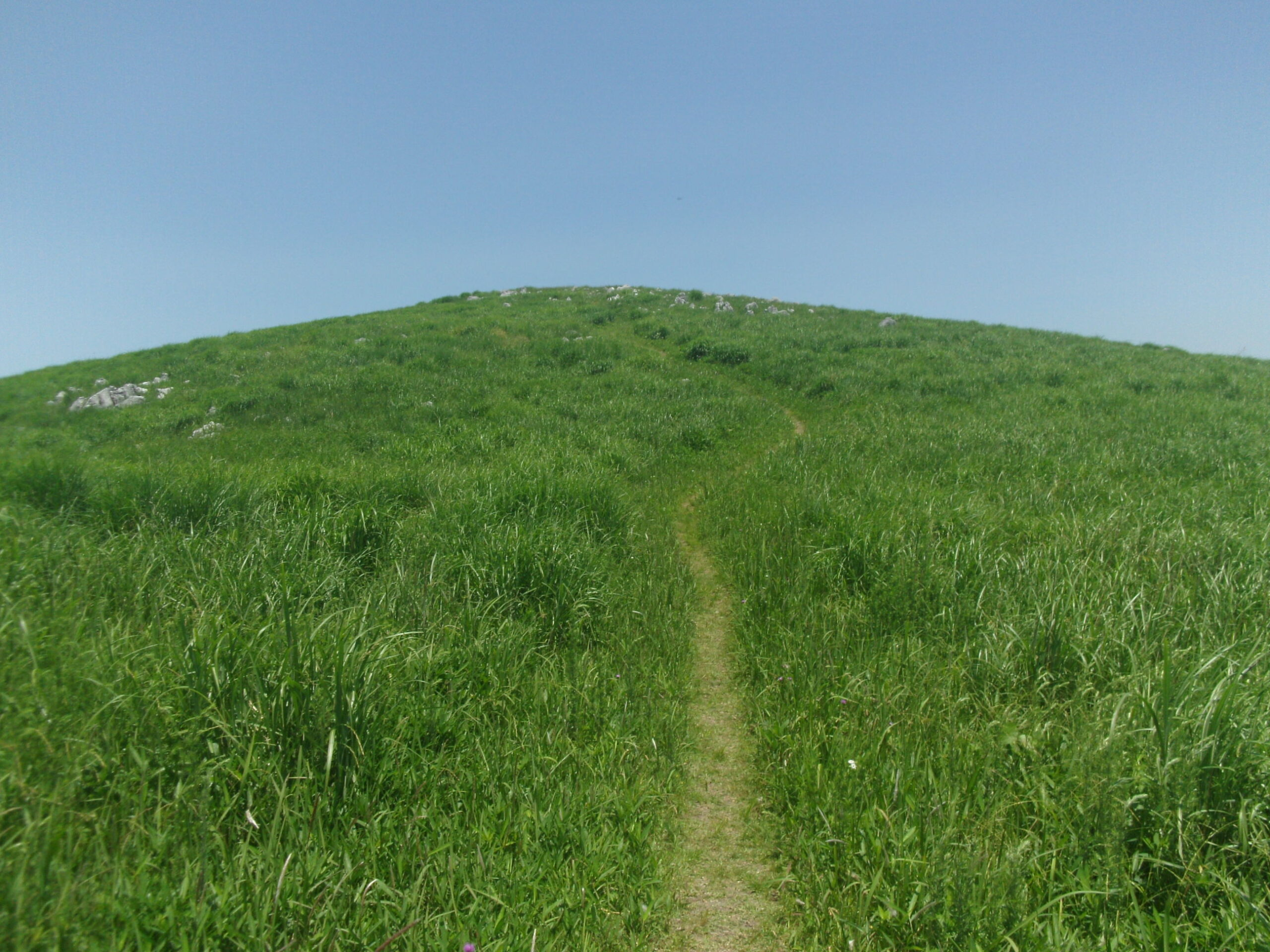 龍護峰の一本道