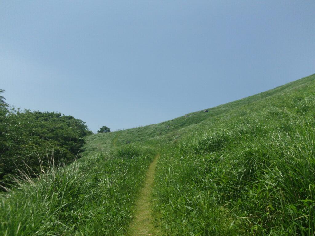 龍護峰への丘