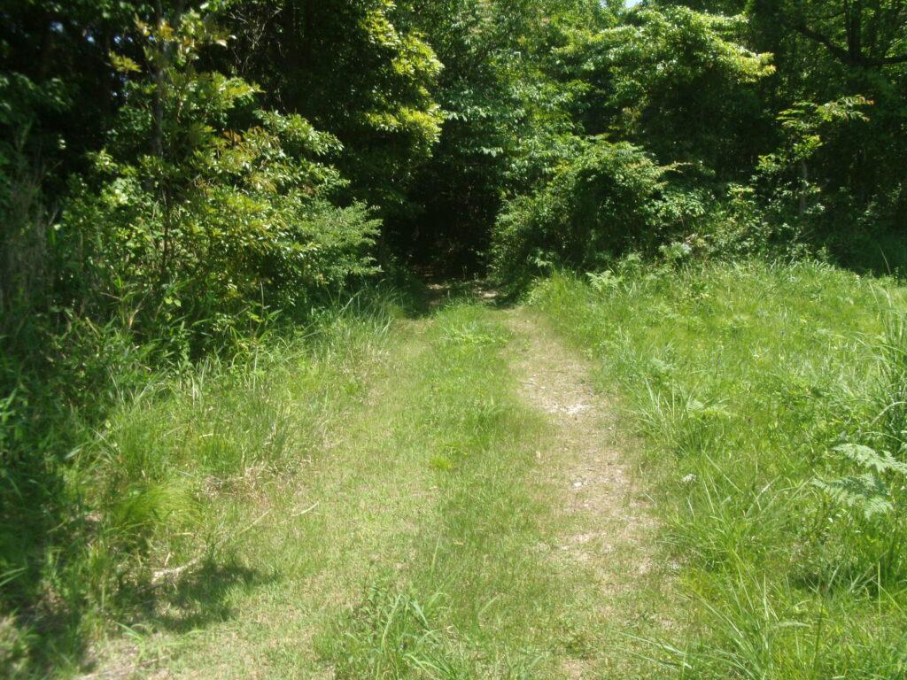下りの森の入口