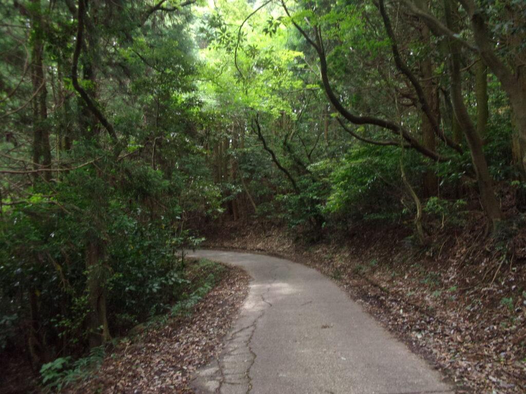 県道101号線嵩山久賀港線