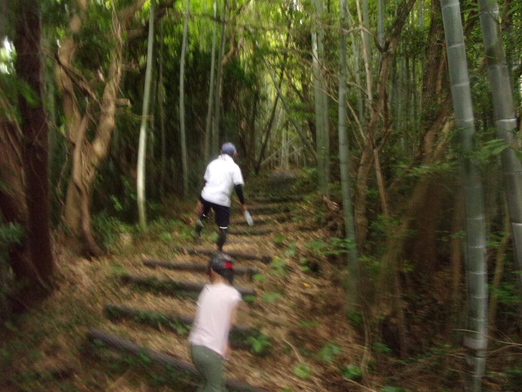 竹林のエリア