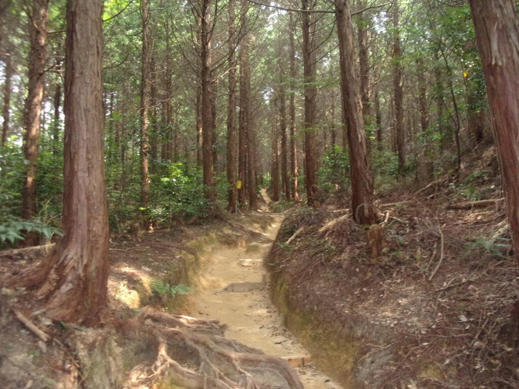 四王司山の登山道