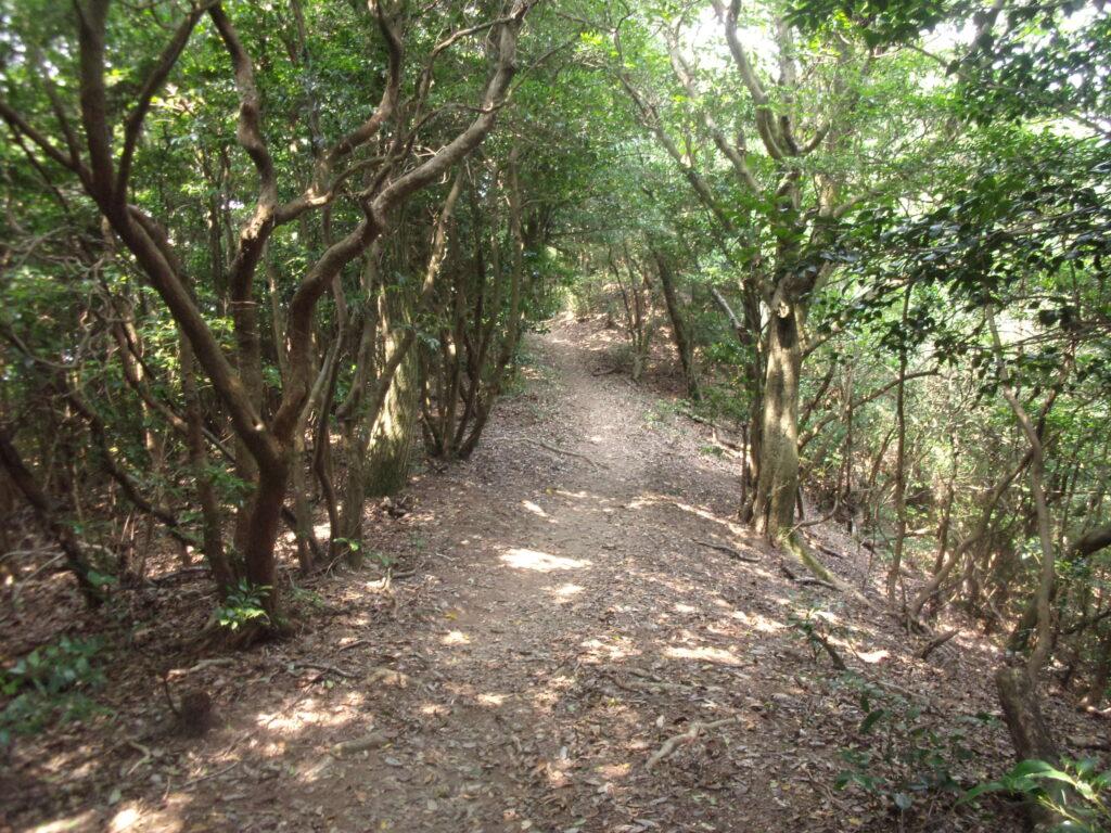 勝山への道 稜線