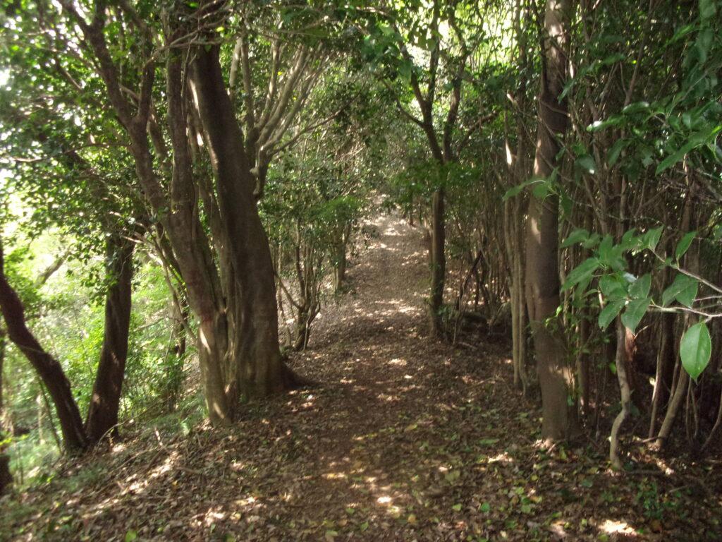 三ヶ嶽林道へ