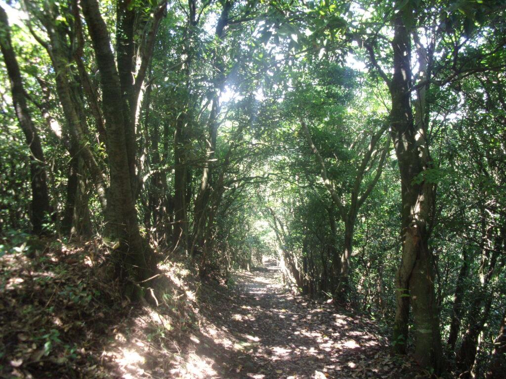 雄鋤崎山への稜線