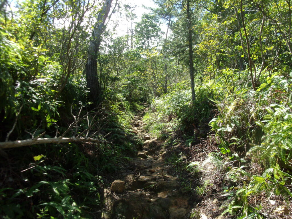 陶ヶ岳登山道 ガレ
