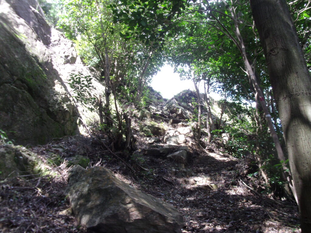 陶ヶ岳登山道 分岐点を右へ
