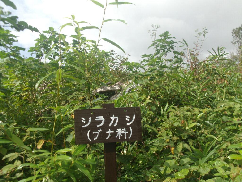 家族旅行村ミニ植物観察園