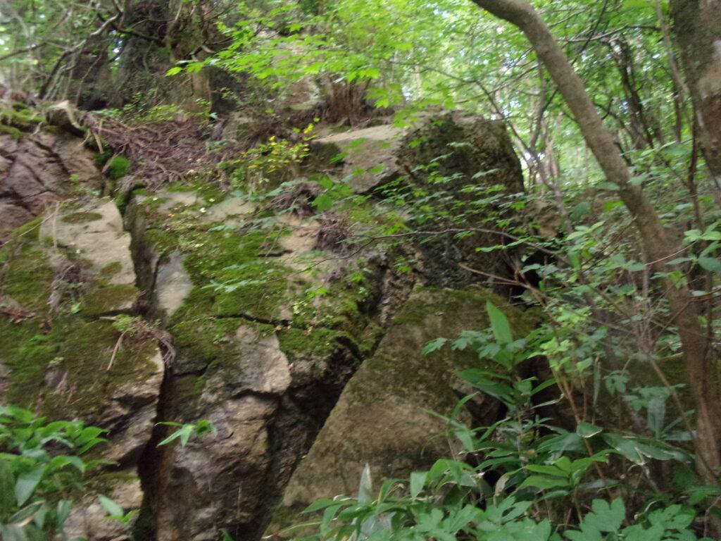 不知火の杉の根元の岩
