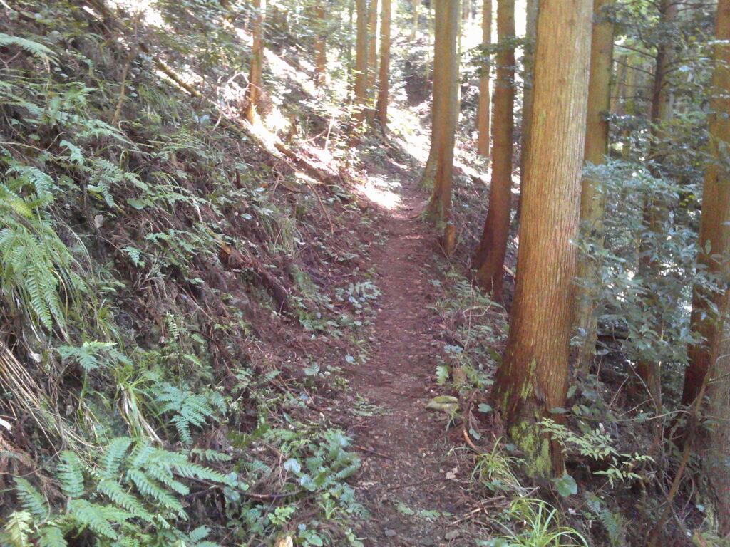 明るい林2