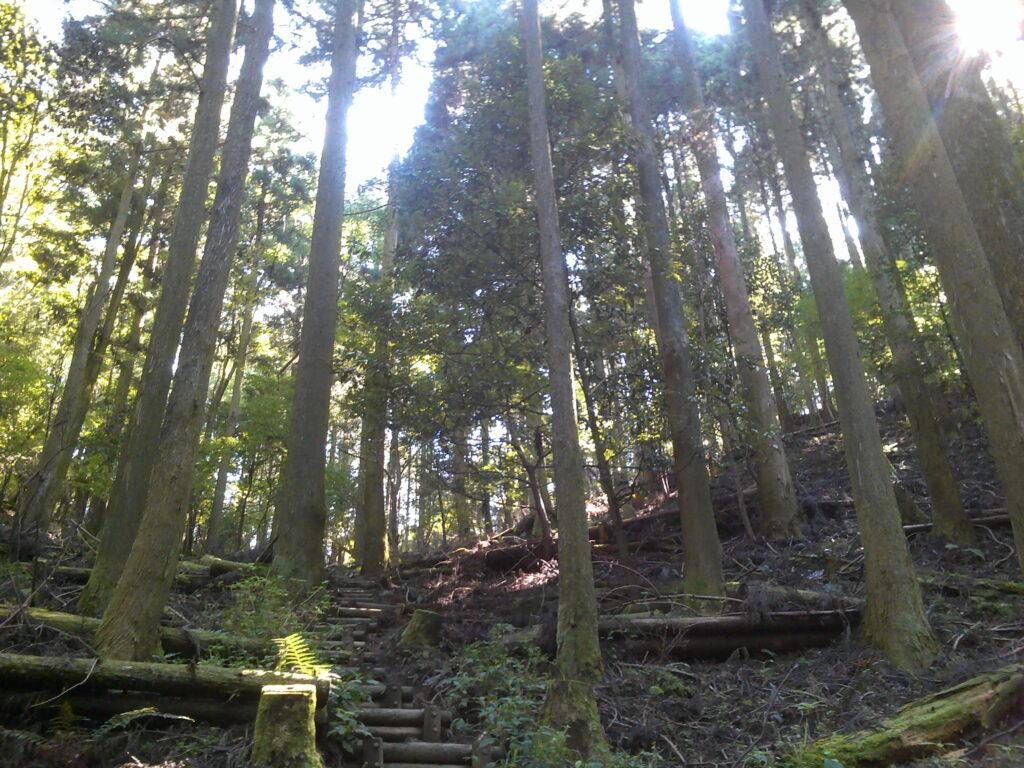 木止めの階段&空が開けた!