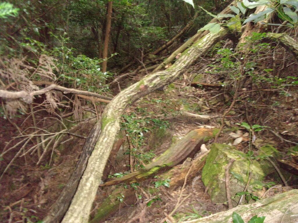 小菜の瀧への道