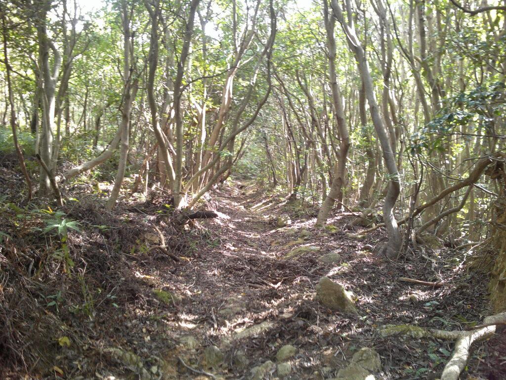 木のアーチ