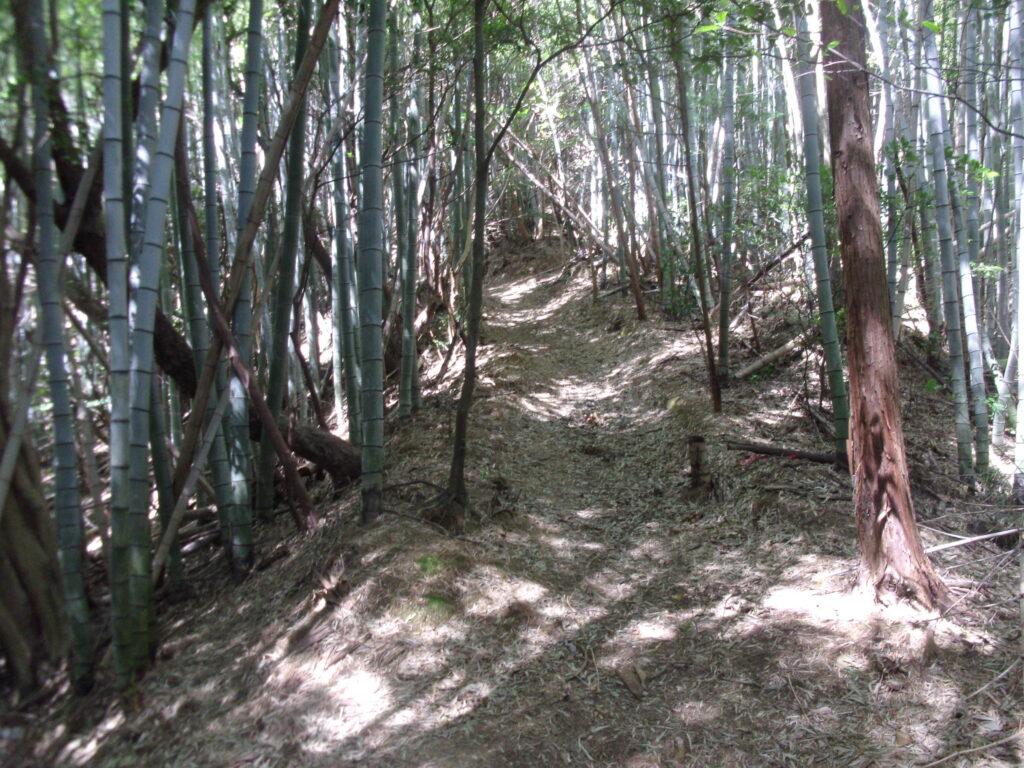竹林の中を進む