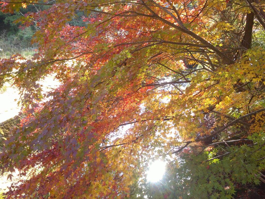 石柱渓手前の沢に紅葉