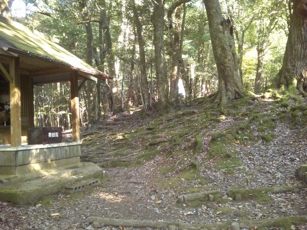 最初トトロの森みたい