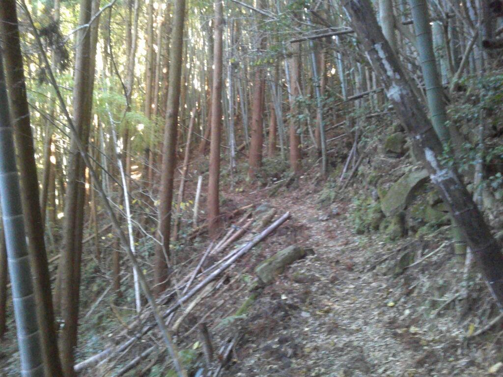 竹藪に変化
