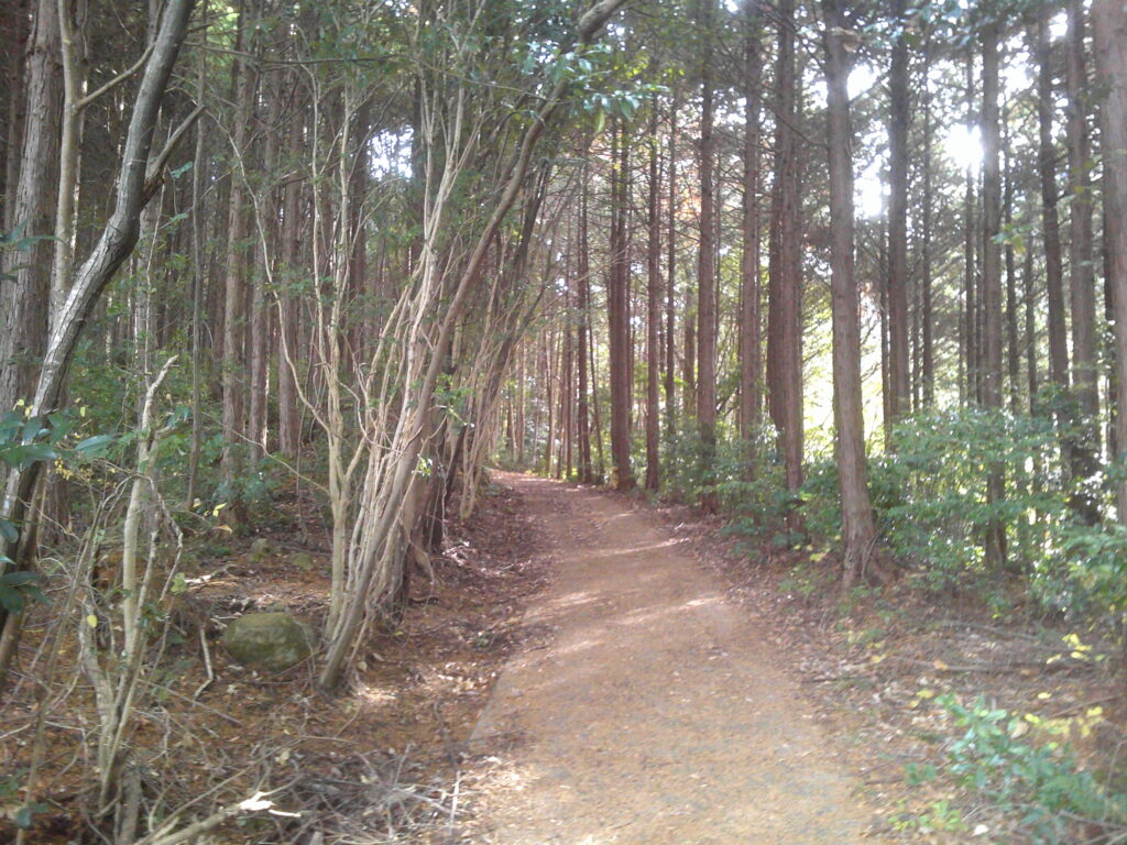 もっと綺麗な林道に出る