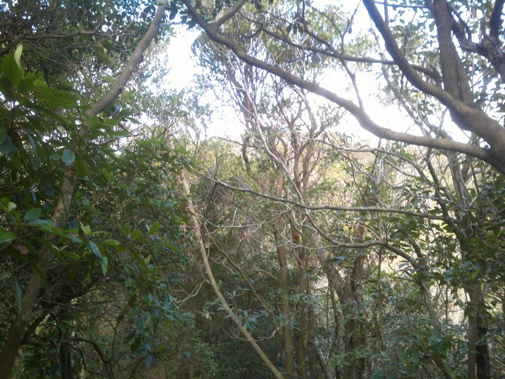 林の向こうにもう一山