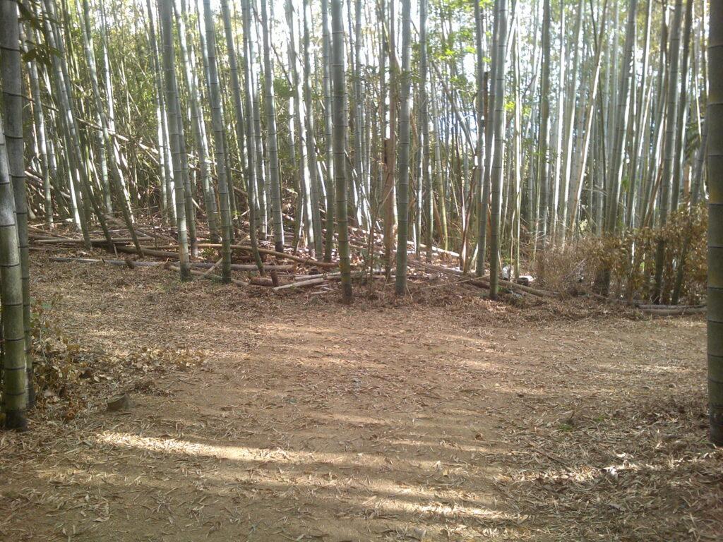 竹藪の分かれ道
