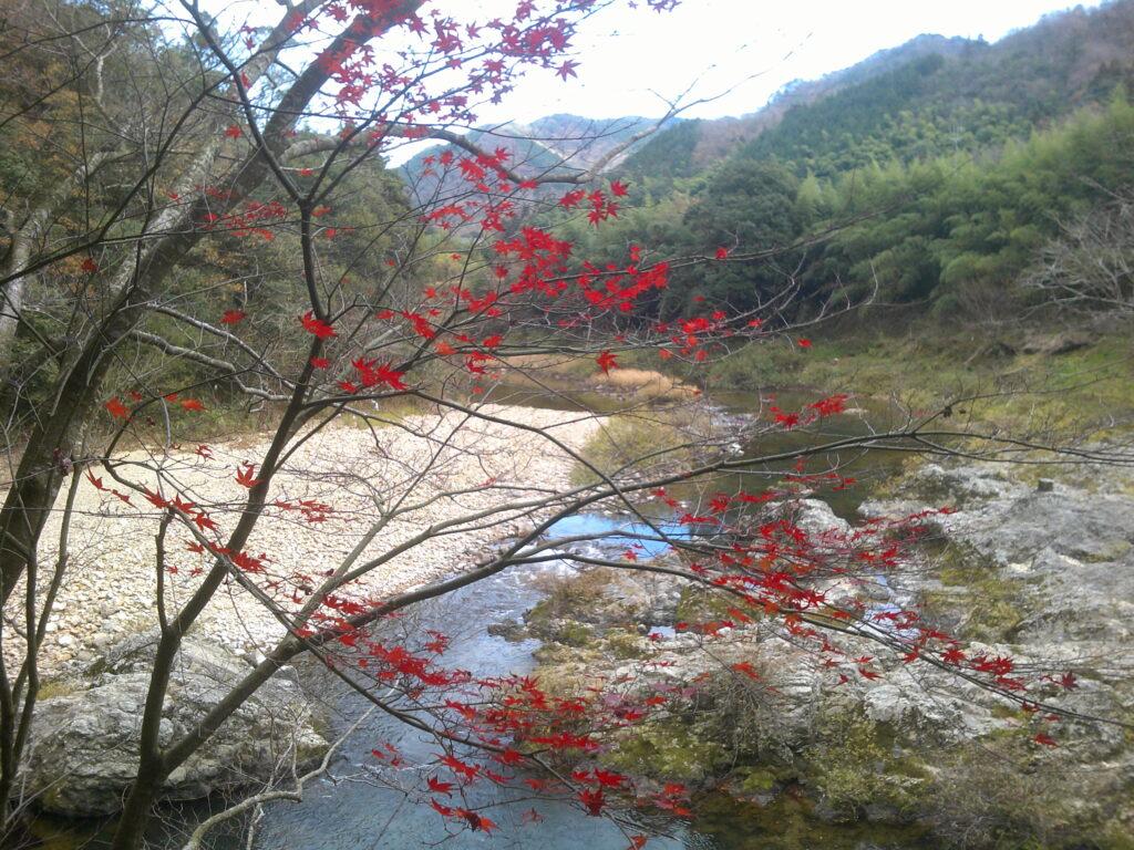 丁字川出会淵の紅葉