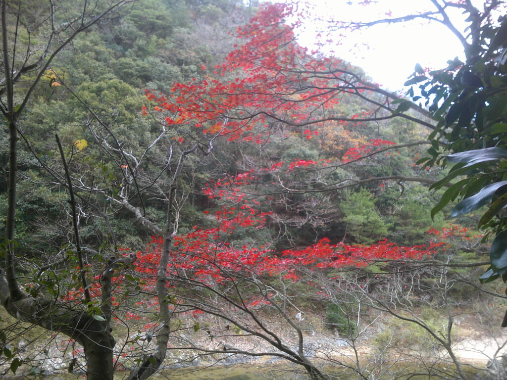 丁字川出会淵付近の紅葉
