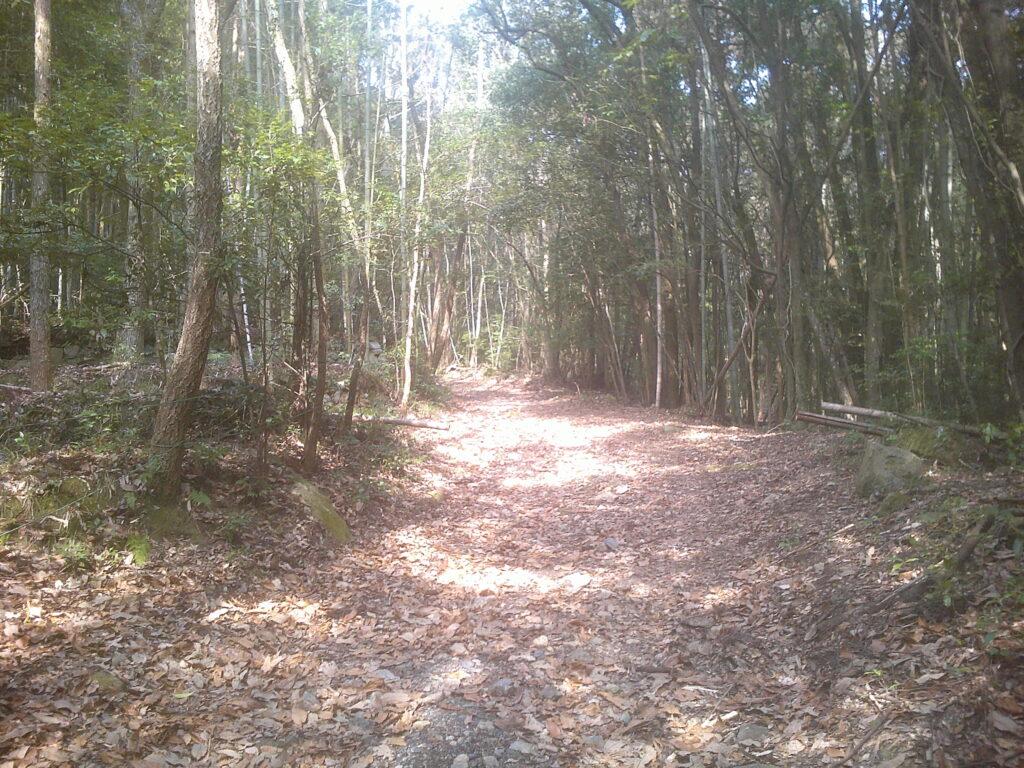 舗装路が落ち葉に覆われている