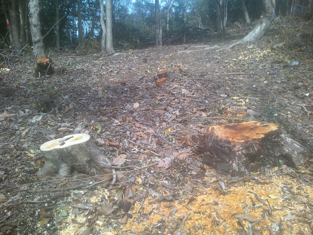 切りたての木