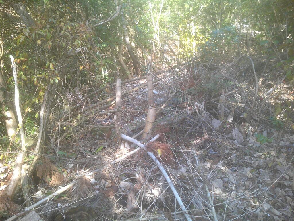 お!竹が整備されてる