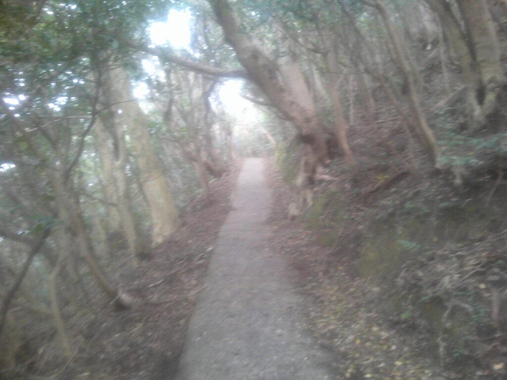 コンクリ道