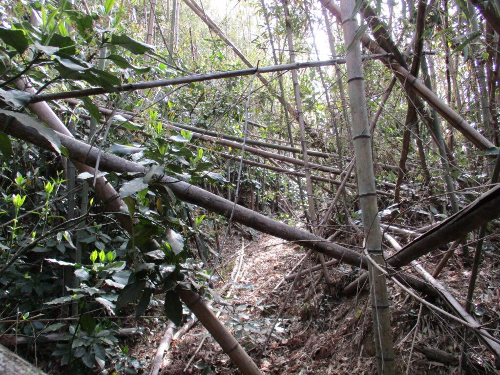 中腹の竹林