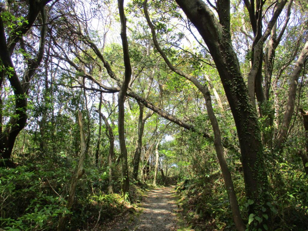 美しい自然探求路に復帰