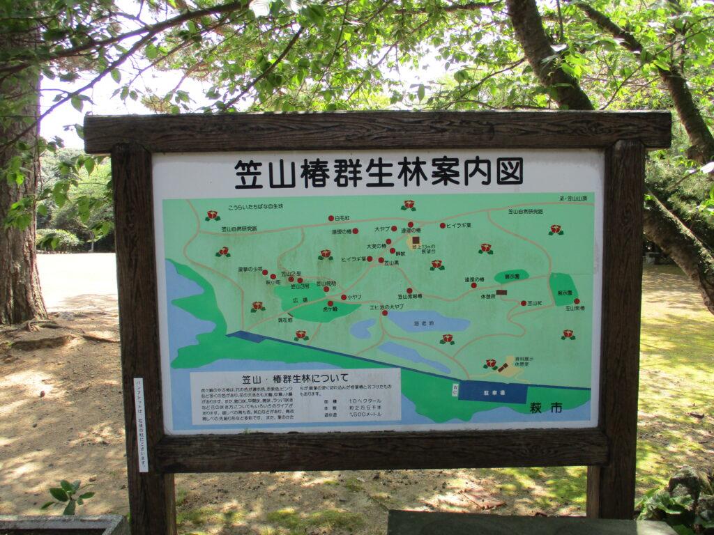 笠山椿群生林案内図