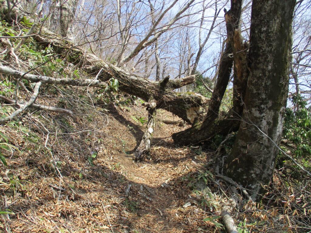 倒木はジャンプで越えて