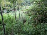 【山口県百名山】大将軍山への藪がひどくて大きく迂回
