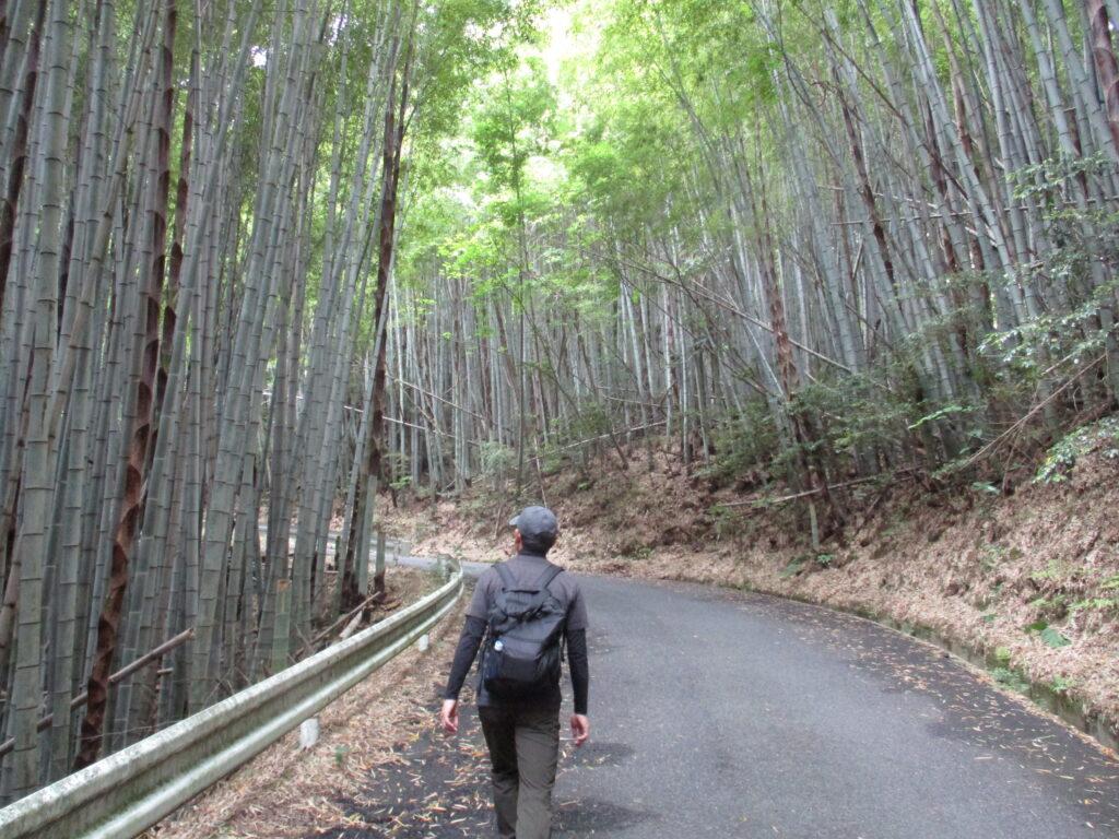 竹林の舗装路