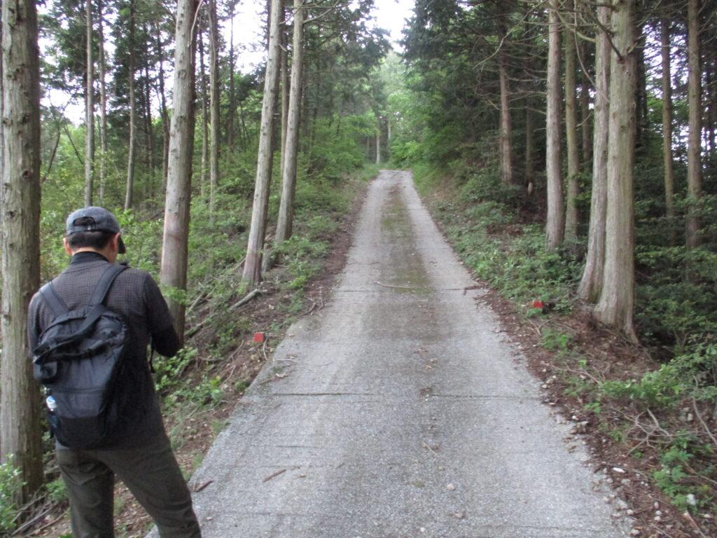 大将軍山への舗装路