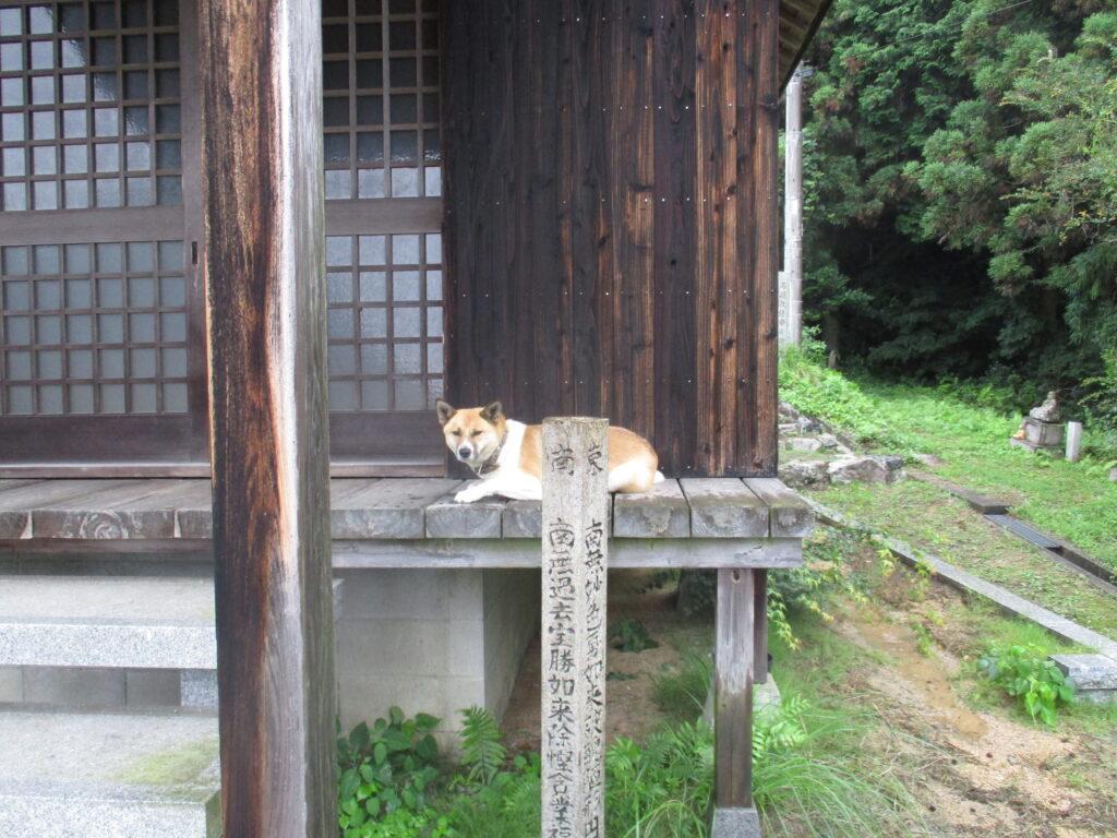松岳山正法寺さんの護法の犬